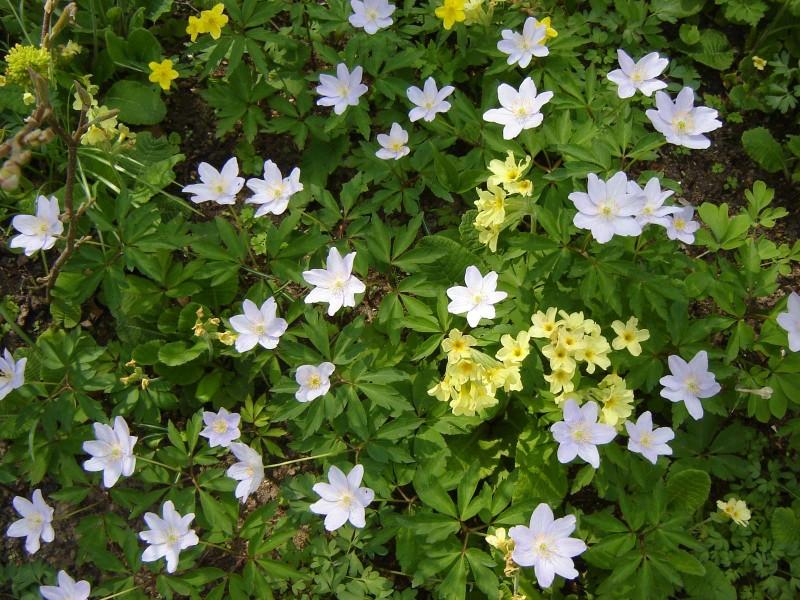 buchenwaldflora_botanischer_garten_bielefeld