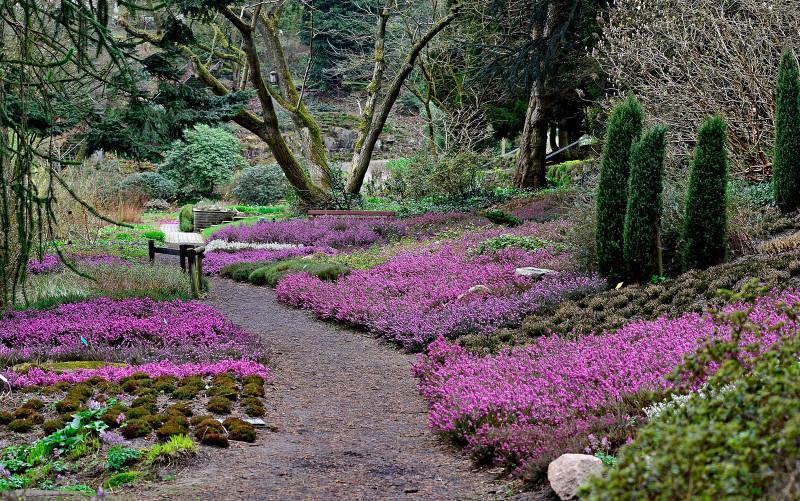 pflanzenwelten verein freunde des botanischen gartens bielefeld e v. Black Bedroom Furniture Sets. Home Design Ideas