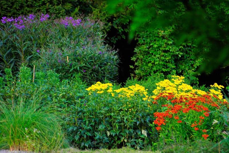 pflanzenwelten verein freunde des botanischen gartens. Black Bedroom Furniture Sets. Home Design Ideas