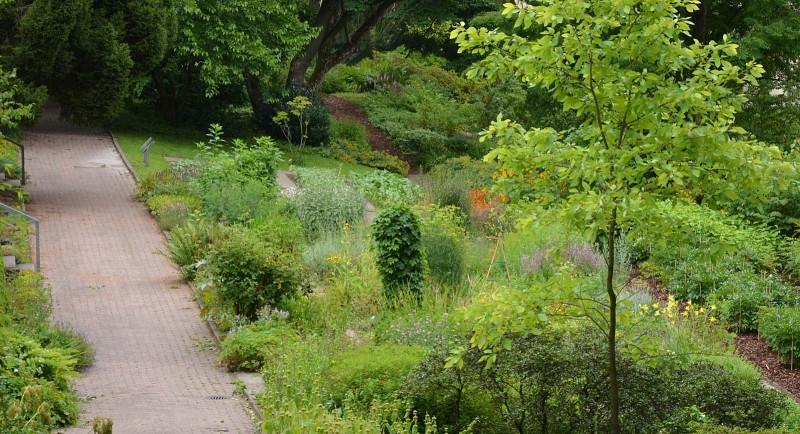 kraeutergarten_botanischer_garten_bielefeld