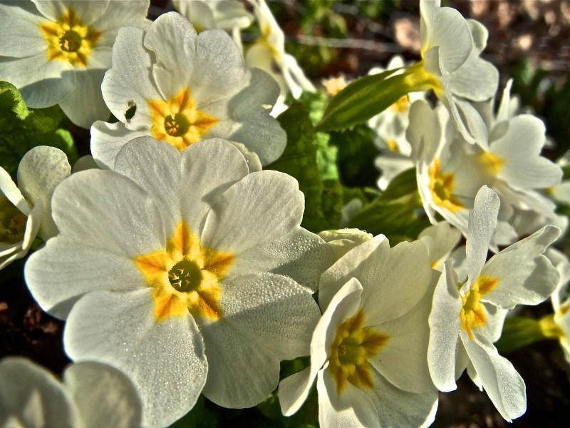 primeltal_botanischer_garten